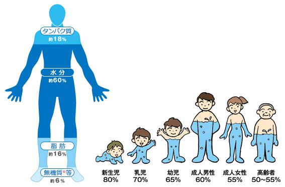 体内の水分